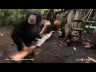 Mono disparando con una AK 47 ( Imperdible ).mp4