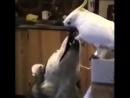 Правильно попугайчик поступает С другом делиться надо 😊👌