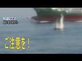 NEWS WEB EASY東京湾で鯨が泳いでいる「船は気をつけて」