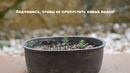 Как вырастить Бонсай с самого начала Выращивание Бонсай из семян