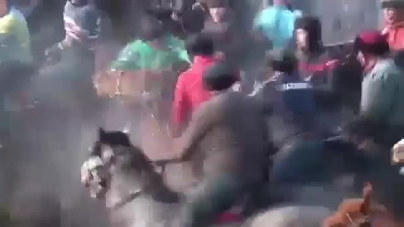 Instagram_kokpar_horses_1534447384143.mp4