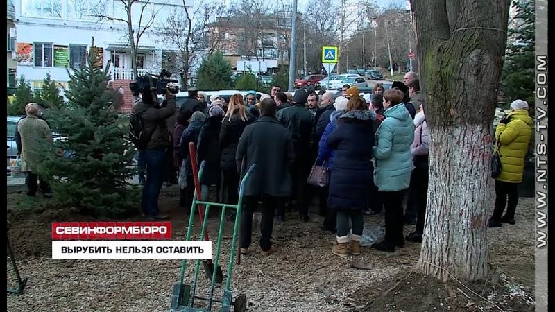 Виновные в самовольном сносе деревьев у «Богдановского» рынка должны ответить - ОНФ