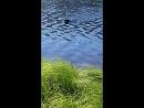 Вот такое нынче северное лето Берта купается в городском озере Сезон открыт😂