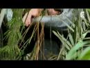 Ils capturent un anaconda à mains nues - ZAPPING SAUVAGE.mp4
