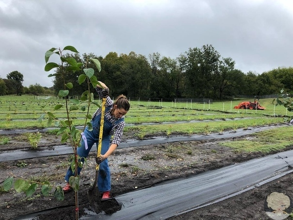 Новое хобби: после развода Дженнифер Гарнер увлеклась фермерством