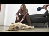 Взьми собаку на роботу - Днпро долучився до всеукрансько акц