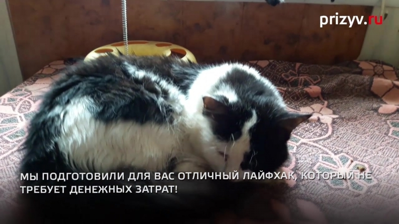 Всем кота Ваш друг ждет в приюте