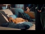 Как быстро перевести деньги, если кот сидит за ноутбуком?