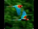 VANGELIS - B R A Z I L - Beautiful Planet Earth
