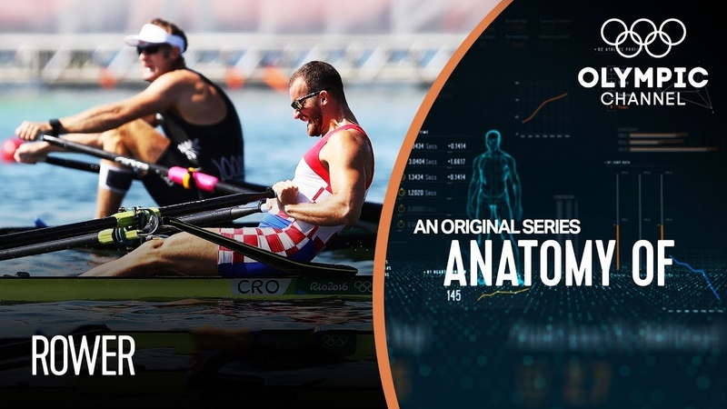 Anatomy of a Rower Do they have the strongest legs of any Olympic athlete