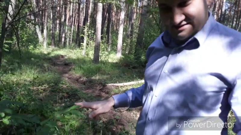 Лес Сосновый бор