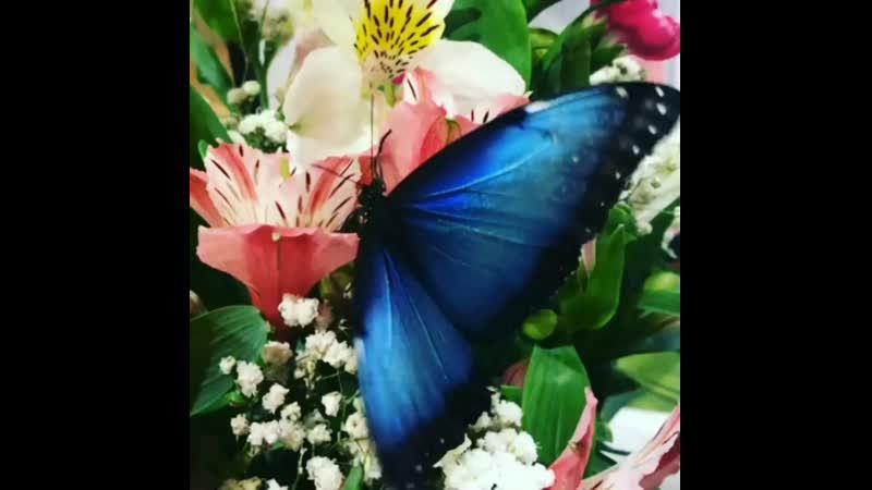 Цветы и Морфо