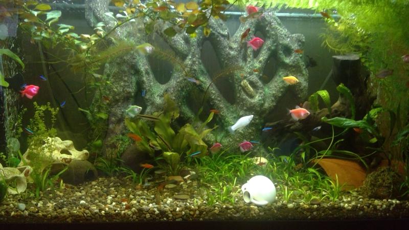 Мой подводный тропический мир... 🐬🐟🐠