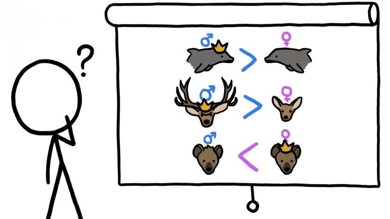 Почему быть самцом гиены полный отстой mp4