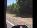 Рязанцы засняли водителей, объезжающих пробку у Солотчинского моста по обочине. Видео размещено в группе «Новости Рязани ВКонтак