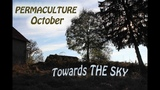 PERMACULTURE - October - TOWARDS THE SKY! (and one real marshmallow recipe)