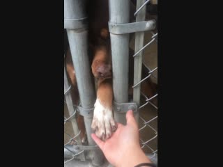 Adopt, don't shop! Was so hard not to let go..