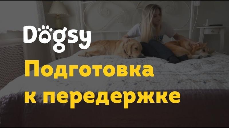 1 Инструкция догситтера Dogsy Подготовка к передержке