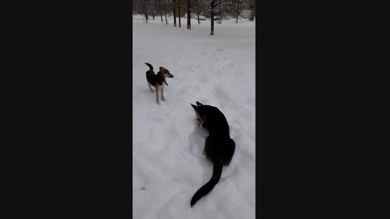 Зимняя прогулка Раечка и Ирса