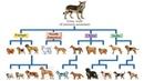 Происхождение собак рассказывает биолог Илья Кельмансон