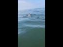 Попавшего на мель дельфиненка спасли сахалинцы