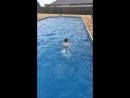 Турнир по плаванию