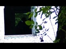 Vlog 5 - Коротко о ввд рипер .