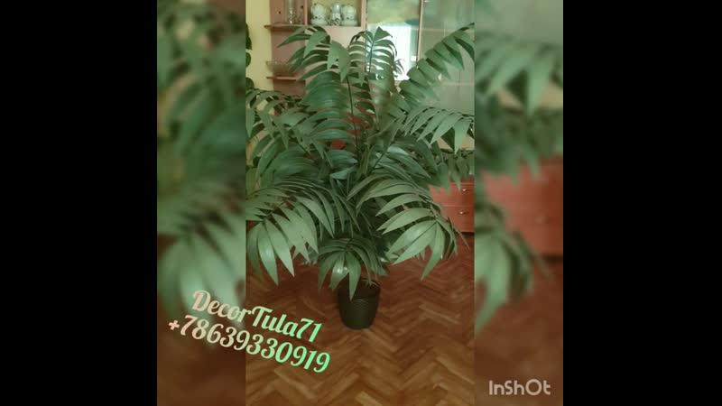 Пальма с нижней подсветкой