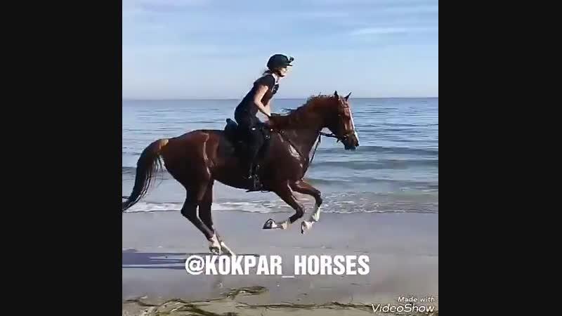 Kokpar_horsesBp1BUvkh8Fh.mp4