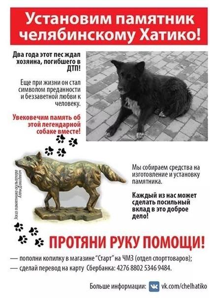 Два года пес по кличке Беляш приходил на то же место, где в последний раз видел своего хозяина, не подозревая, что тот погиб в автомобильной аварии. Собаку подкармливали местные жители. За это