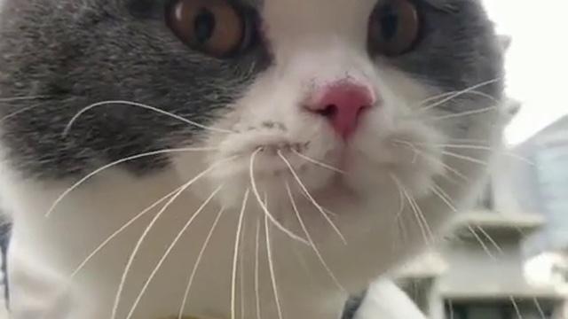 Кот ОЧЕНЬ сильно ругается