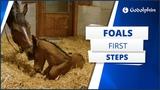 A foals first steps