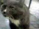 Talking cat Говорящий кот Кеша жалуется на свою судьбу 1