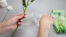 Мастер класс Создание шипов для розы из полимерной глины