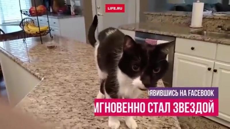 кот с проёбанным горлом
