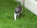 Очень жестокое нападение кота на человека! Осторожно!!!