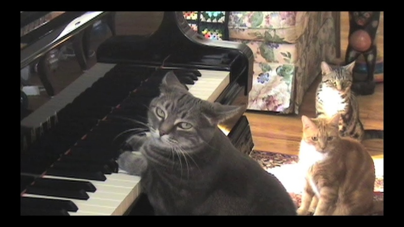 CATcerto. ORIGINAL PERFORMANCE. Mindaugas Piecaitis, Nora The Piano Cat