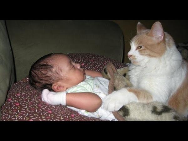 【감동】 고양이가 아기를 위험으로부터 보호합니다 2019