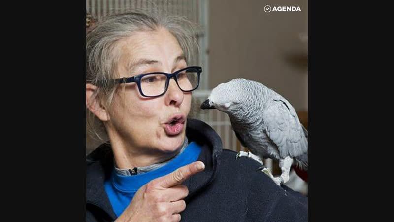 Попугай шопится на Амазоне