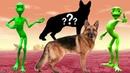 животные на английском языке для детей / смешные видео для детей / видео мультики для детей малышей