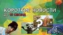 Пьяный ЕНОТ ЗАМОК ЗА 100 $ Памятник ПИСЮНУ