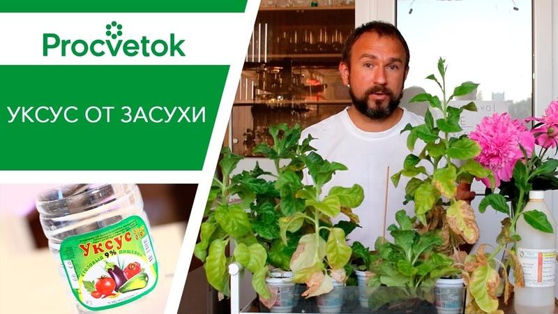 Полив огорода. Уникальный способ полива томатов, перцев, огурцов. Использование 9 уксуса от засухи.