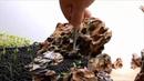 Hướng dẫn xếp đá Tiger tạo bố cục thủy sinh tự nhiên