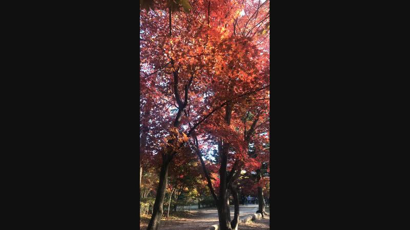 Золотая осень на острове Намисом VisitaKorea 🍁🍂🍃