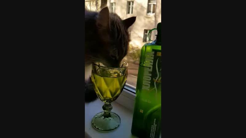Котик и Хлорелла микс