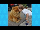 CHUBBY DOGS MAKES BABY HAPPY | Dog loves Baby Compilation