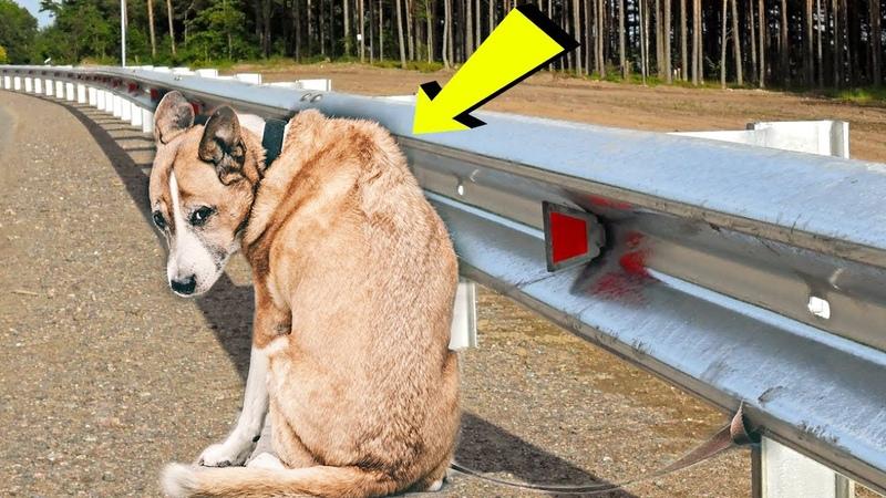 Пёс, привязанный к отбойнику сидел и ждал своего хозяина... Он не мог поверить что его бросили...