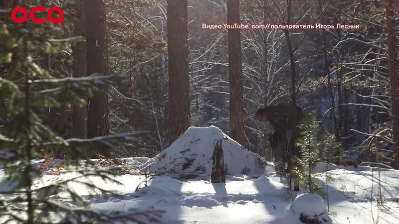 Трое суток в зимней тайге без еды и тепла уроки выживания от опытного лесника