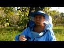 Майские отводки на плодную матку Карника, развитие к концу сезона