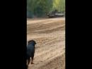 Майбах и танк